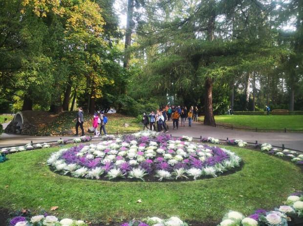 Tak prezentują się właśnie wykonane nasadzenia w parku Oliwskim.