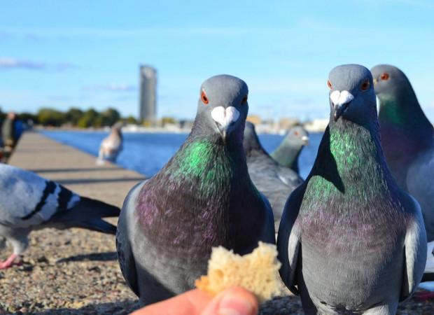 Chleb jest szkodliwy dla ptaków.