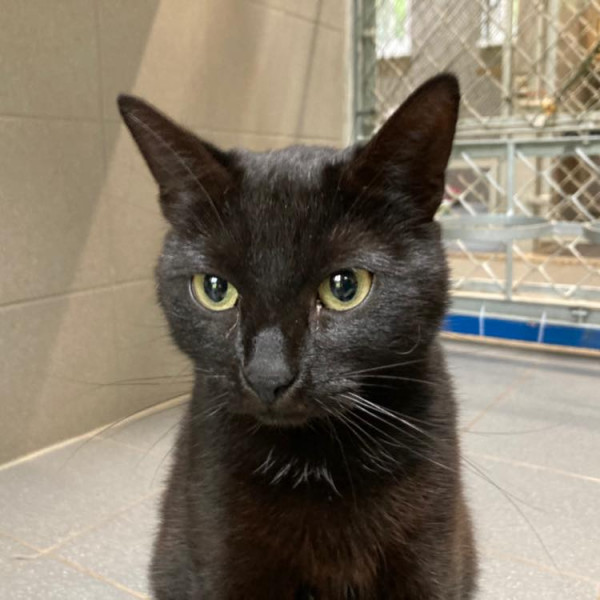 W schronisku Sopotkowo znajduje się obecnie ponad 100 kotów do adopcji.