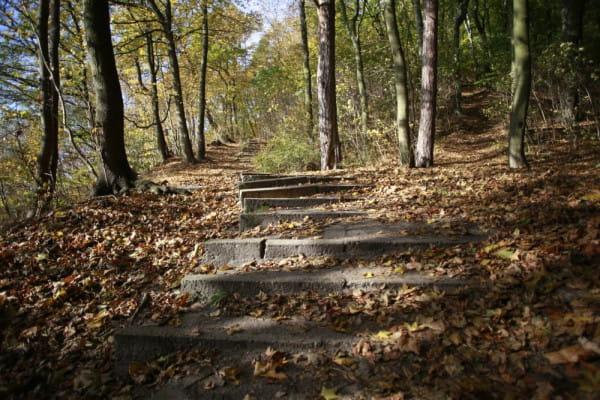 19-letnią Darię morderca zaatakował, gdy uprawiała jogging w lesie w Oliwie.