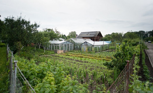 W Trójmieście ogródki działkowe zajmują ok. 1200 ha. nawet ostrożnie licząc, te tereny mogą być warte ponad 1 mld zł.