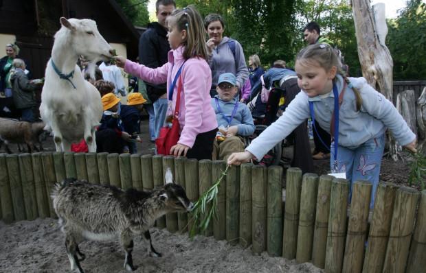 Podczas Parkowania na dzieci i zwiedzających czeka wiele niespodzianek - w oliwskich lasach będzie można wytropić dzikie zwierzęta. Z kolei w ZOO, pod okiem przewodnika, zobaczyć i dowiedzieć się o nich wielu ciekawostek.