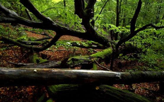 """Powalone drzewa w rezerwacie przyrody """"Zajęcze Wzgórze"""""""