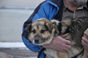 """Bohater spektaklu """"Baltic. Pies na krze"""" w 2010 roku przepłynął Wisłę i został ocalony przez załogę Baltici. Ci, którzy go ocalili, zobaczą spektakl podczas premiery 16 grudnia."""