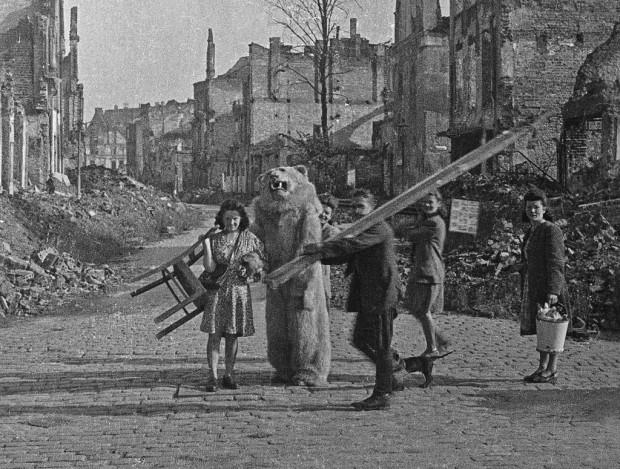 Biały miś miał być tłem do fotografii, którą planowali zrobić sobie bohaterowie tego zdjęcia. Fotografowi nie podobały się ruiny miasta, więc miał ze sobą zwinięty w rulon obraz Gdańska sprzed wojny.