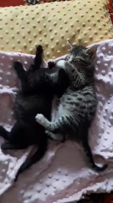 Kajko i Kokosz - dwa małe słodziaki: wideo 11350
