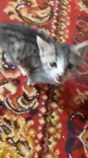 Kajko i Kokosz - dwa małe słodziaki: wideo 11352