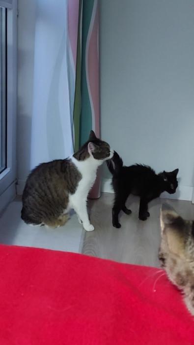 Dwie energiczne kotki do adopcji: wideo 13078