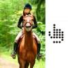 Sklep stacjonarny i portal jeździecki ZABOOKUJ.eu