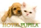 Całodobowy hotel dla małych psów i kotów
