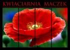 Kwiaciarnia Maczek