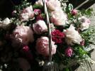 Kwiaty Piwonii